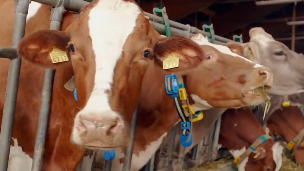 Huawei gana clientes para su 5G entre las vacas suizas