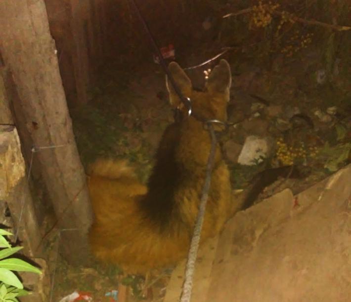 Apareció un Aguará Guazú en la vía pública: lo rescataron y devolvieron a su hábitat